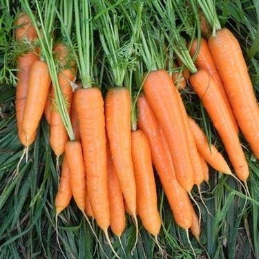 Radici - carote