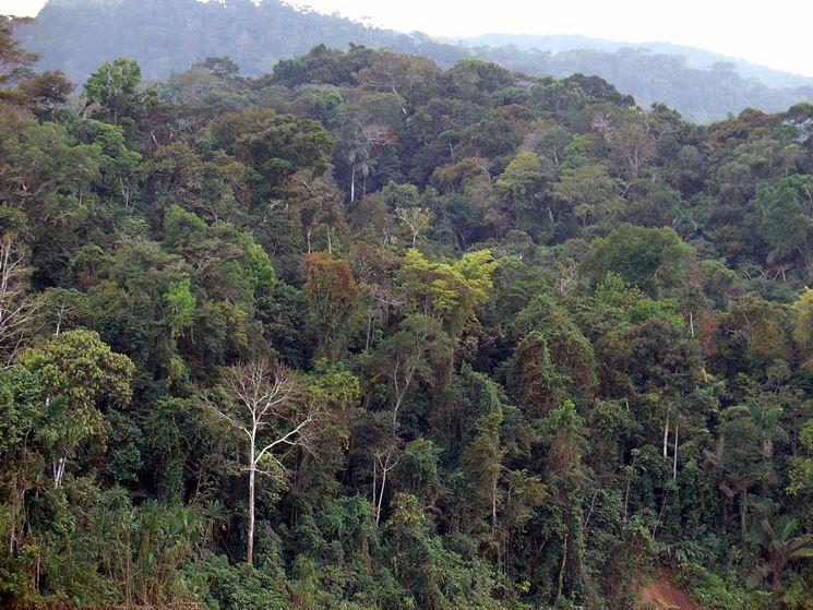 Foresta pluviale amazzonica