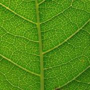 respirazione delle piante
