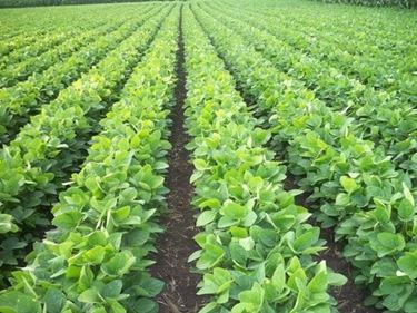 Un terreno coltivato