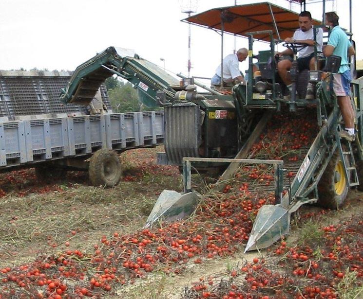 concimazione industriale pomodori