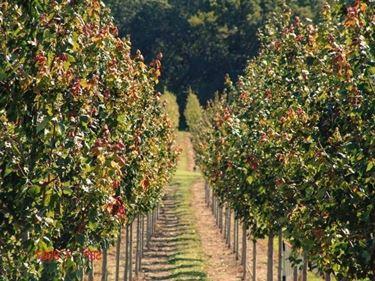 Concimare le piante da frutto