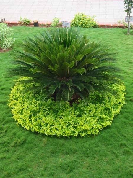 Concime npk concime for Plante japonaise pour jardin