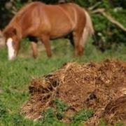 concime da cavalli