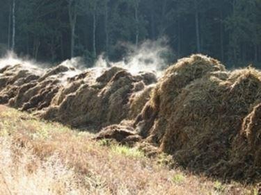compost in formazione