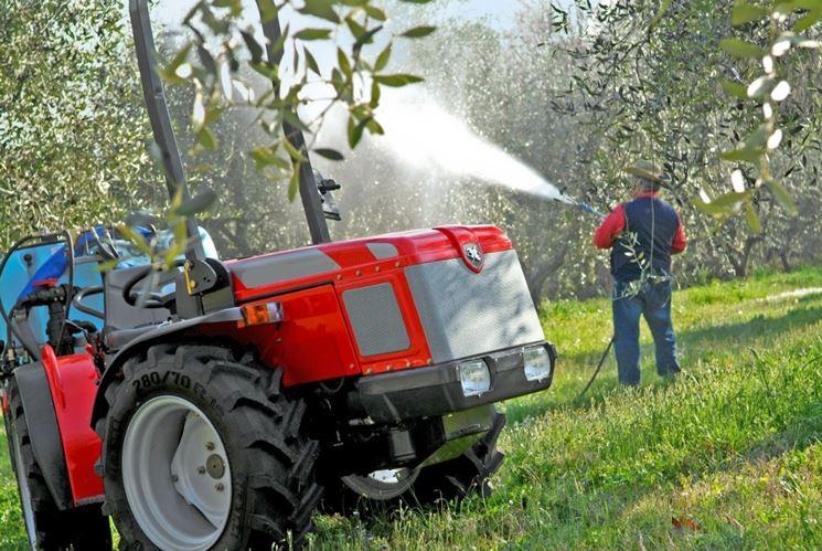 concimazione fogliare olivo