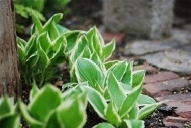 foglie in salute