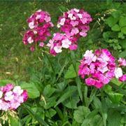 fiori ben trattati