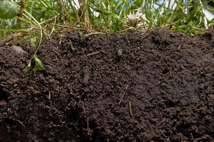 Fertilizzanti organici humus