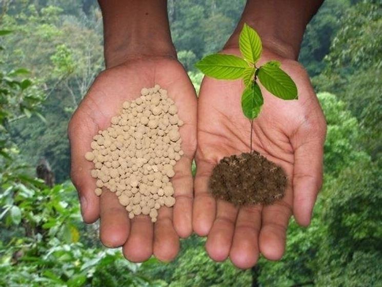 Fertilizzanti per le piante