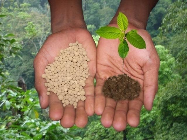 Fertilizzante Per Piante : Fertilizzante per le piante concime