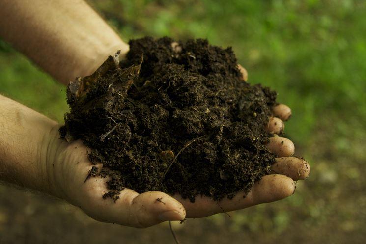 Composto organico fertilizzante