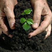 Fertilizzanti per piante