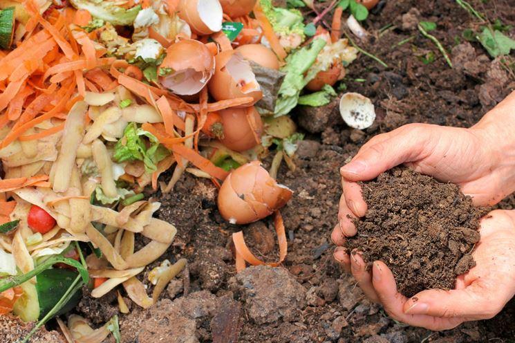 Concime organico fai da te