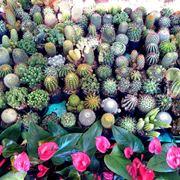 Ampia variet� di piante grasse