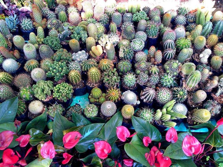 Ampia varietà di piante grasse