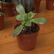 terriccio piante grasse