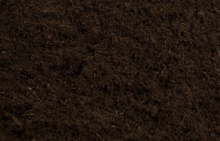 La torba bruna