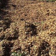 foglie da aspirare