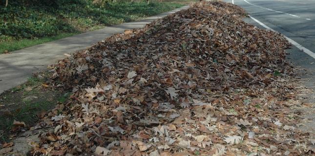 <h6>Aspira foglie</h6>L'aspira foglie � un attrezzo da giardino che permette di sostituire la scopa ed il secchio, garantendo una grande velocit� di esecuzione ed anche un alleggerimento del lavoro di pulizia del giardino.