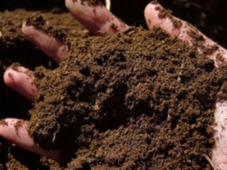Esempio di concime organico