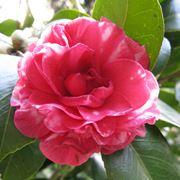 Le piante da giardino giardinaggio piante per giardino for Giardinaggio e fiori