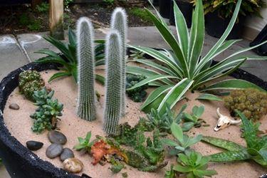 Aiuola di piante grasse