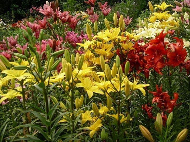 Piante da fiore da giardino