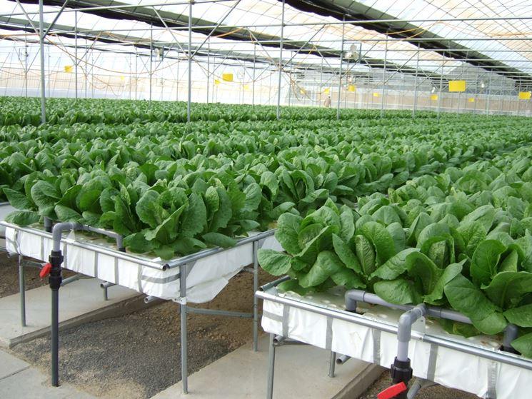 Coltivazione idroponica su substrato artificiale