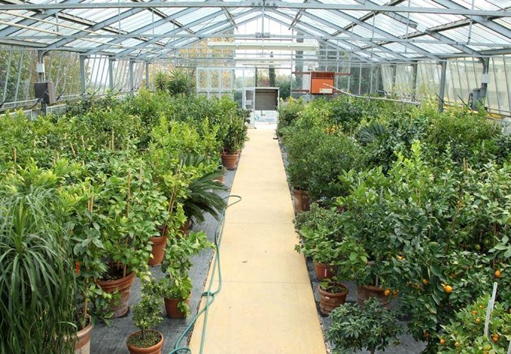 il vivaio giardinaggio vivai e giardinaggio