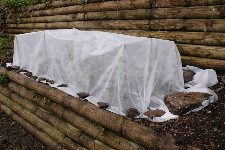 copertura piante inverno