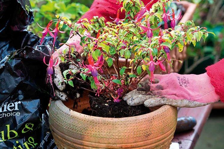 talee piante