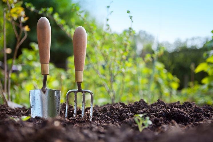 piantare piante primavera