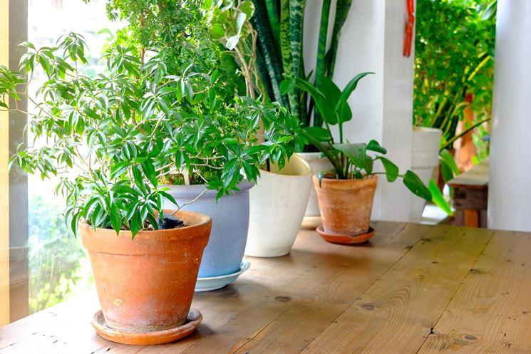 Manutenzione piante in vaso