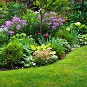 piante giardino fiorite