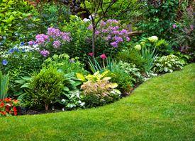 Le piante da giardino