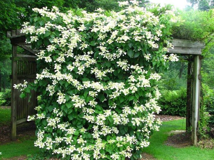 Le piante da giardino - Giardinaggio - Piante per giardino