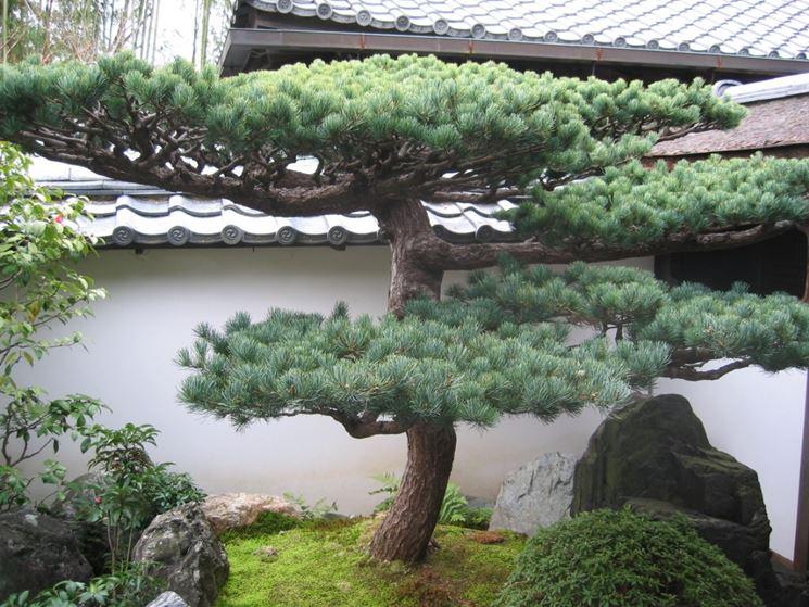 Le piante da giardino giardinaggio piante per giardino - Alberi da giardino di piccole dimensioni ...