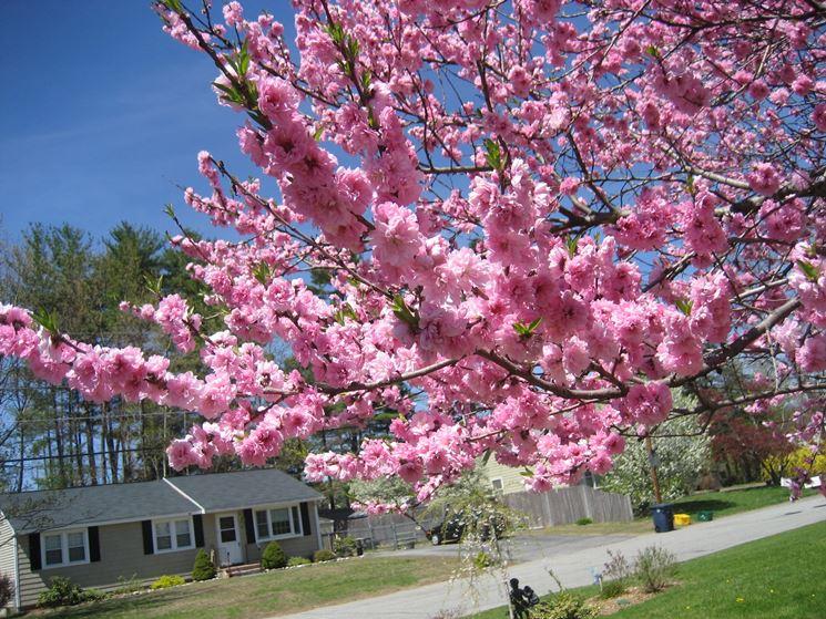 Nei Giardini Di Medie Dimensioni Si Possono Scegliere Alberi O Piante  Erbacee Dalla Fioritura Primaverile E Dai Colori Più Vari Ed Intensi.