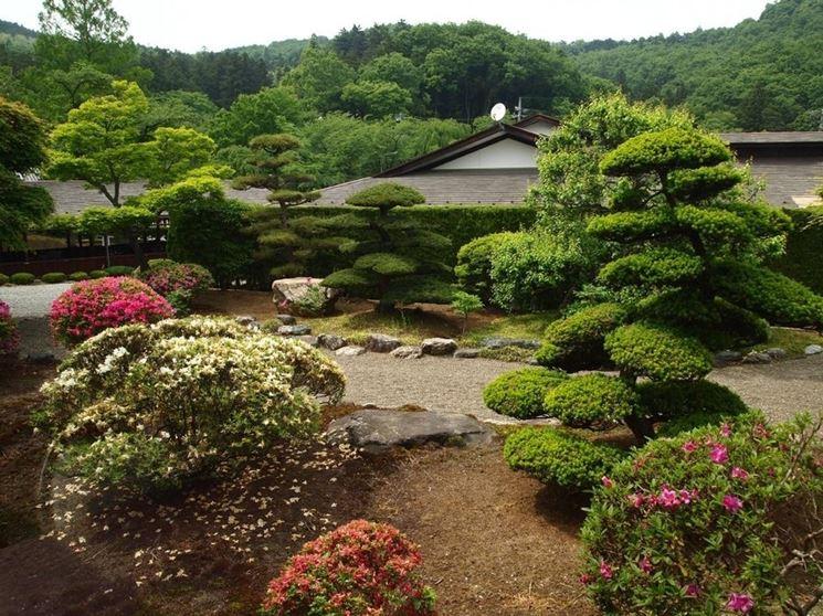Le piante da giardino giardinaggio piante per giardino for Giardino zen piante