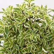 Le piante da giardino giardinaggio piante per giardino for Alberelli da esterno