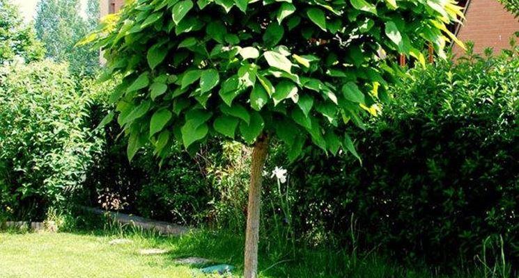pianteantizanzare2_zpsbb77f844