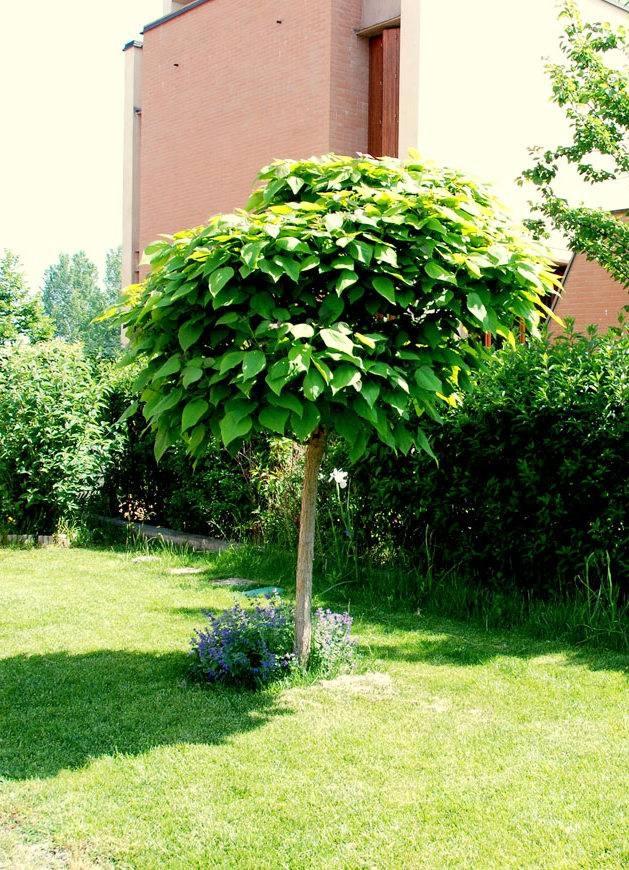 piante antizanzare da giardino idea creativa della casa