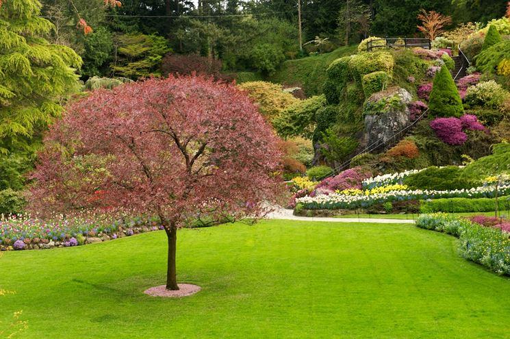 Prato da giardino giardinaggio prato per il giardino for Prato manutenzione