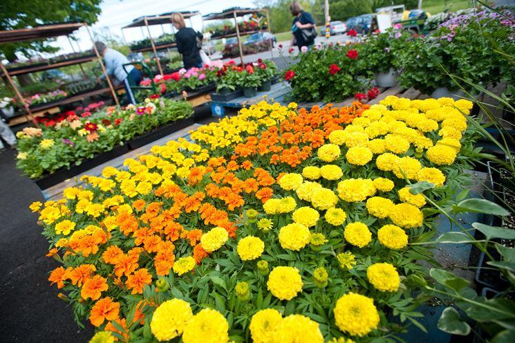 Articoli giardino