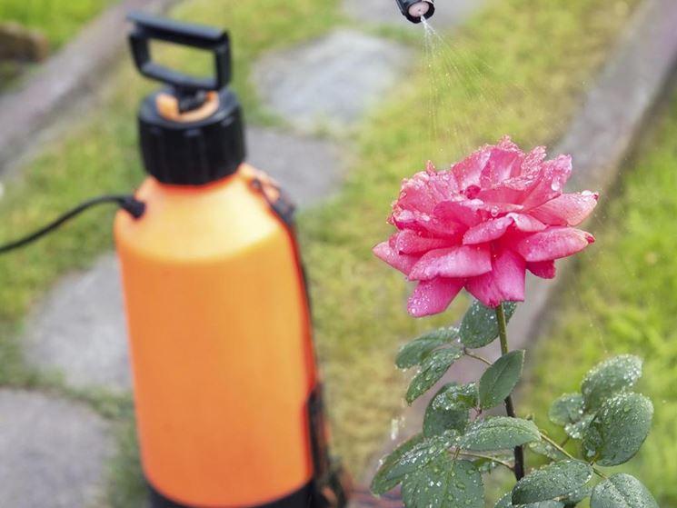 Fungicida naturale da giardino