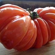 pomodori malattie