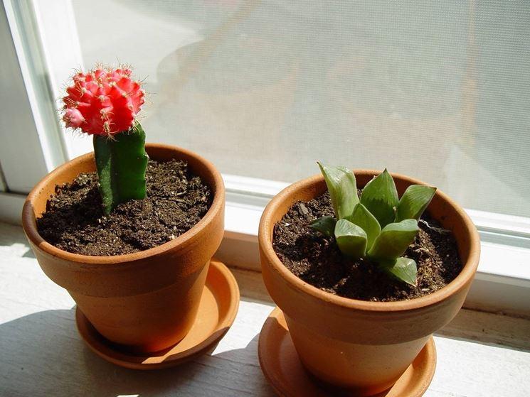 Malattie piante grasse malattie delle piante for Vendita piante grasse on line