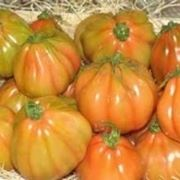 malattie dei pomodori