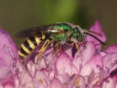 vespa particolare